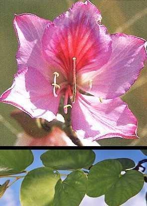 Orchideen-Baum