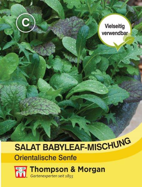 Salat Babyleaf-Mischung Orientalische Senfe