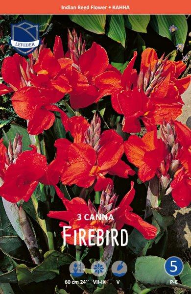 Canna Firebird 80cm 3St.
