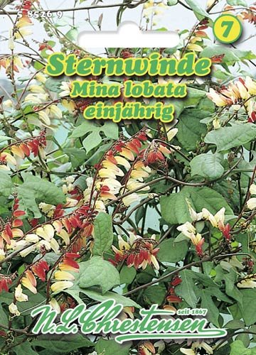 Sternwinde