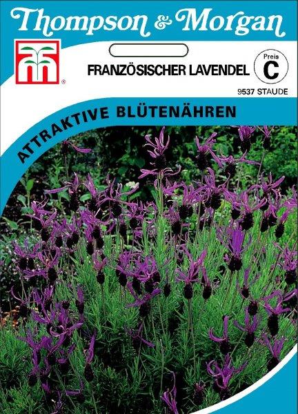 Französischer Lavendel