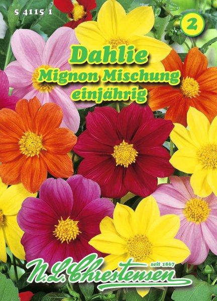 Dahlie Mignon Mischung