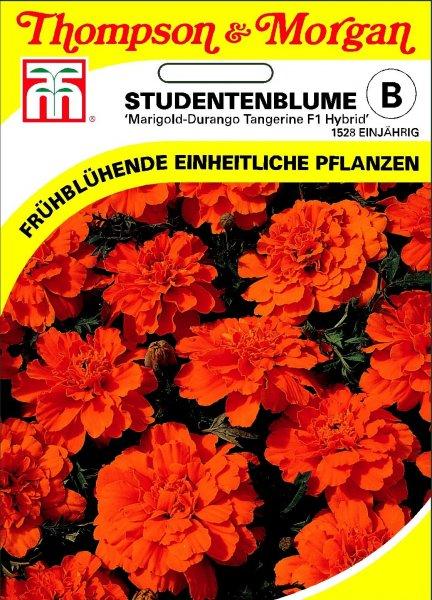 Studentenblume Marigold-Durango Tangerine F1 Hybride