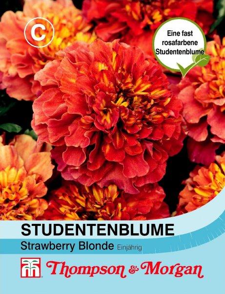 Studentenblume Strawberry Blonde