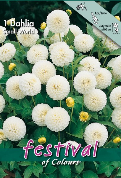 Dahlie Small World