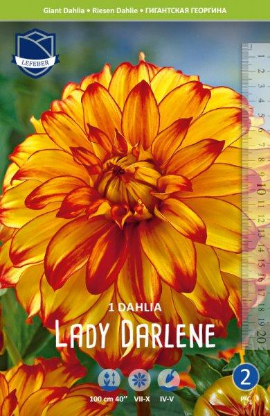 Dahlie Lady Darlene