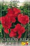 Canna Cherry Red 40cm 3St.
