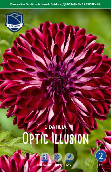Dahlie Optic Illusion