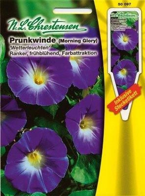 Prunkwinde violett weiss