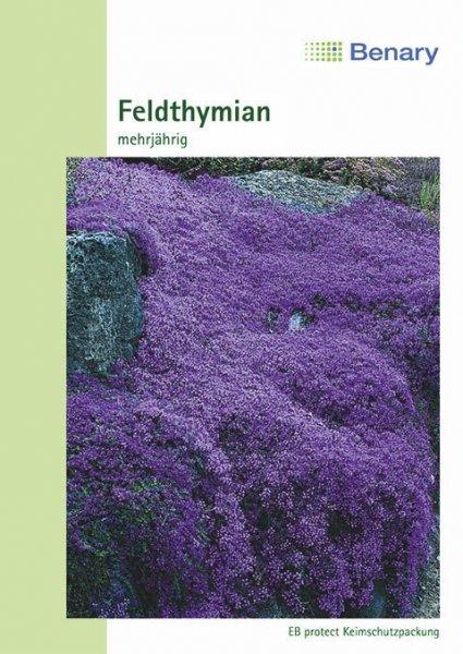 Feldthymian