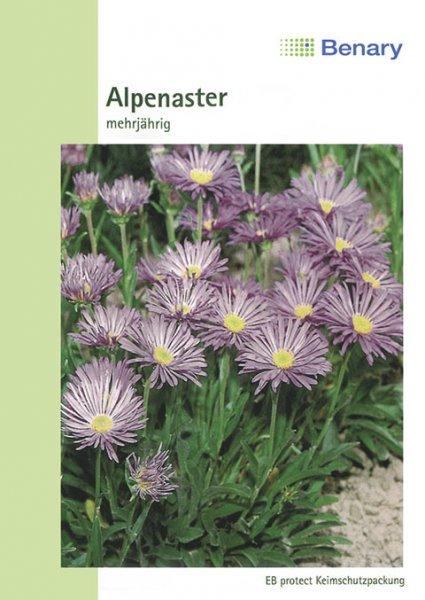 Alpenaster Mischung