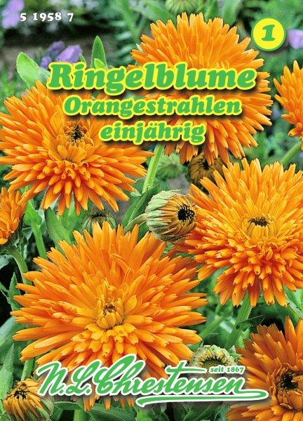 Ringelblume Orangestrahlen