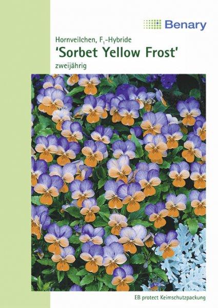 Hornveilchen 'Sorbet F1 Yellow Frost', zweijährig