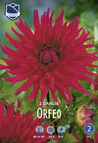 Dahlie Orfeo
