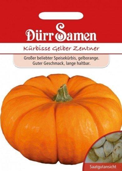 Kürbis Gelber Zentner