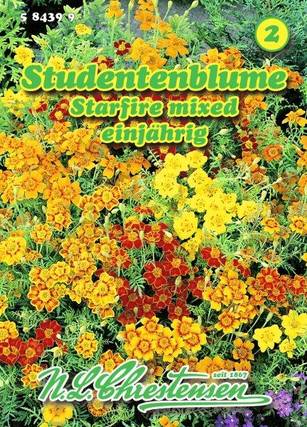 Studentenblume Starfire mixed