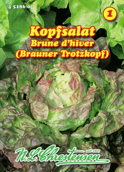 Kopfsalat Brauner Trotzkopf