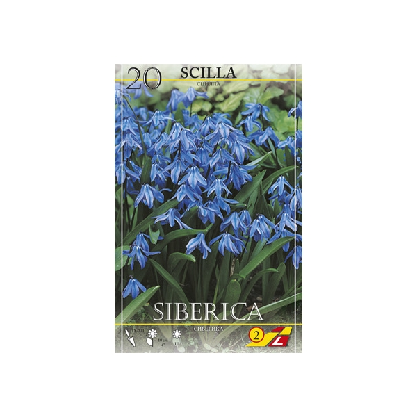 Scilla Siberica 20St.