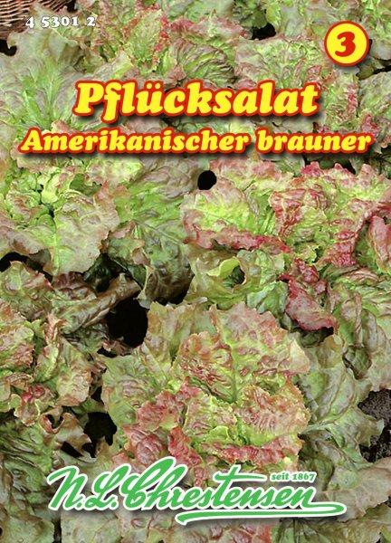 Pflücksalat Amerikanischer brauner