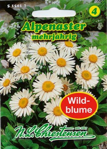 Alpenaster MHD21
