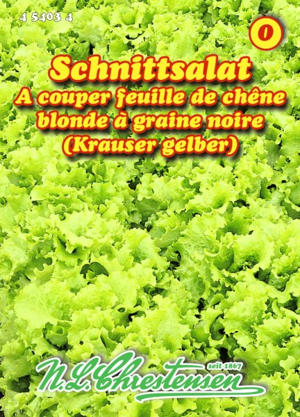 Schnittsalat Krauser Gelber