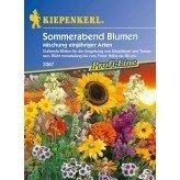 Sommerabend Blumenmix