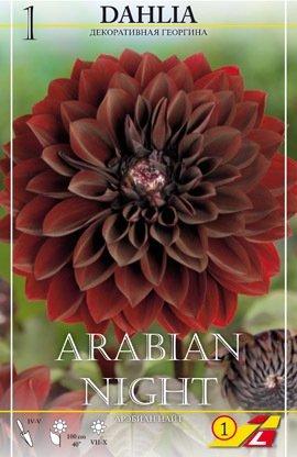 Dahlie Arabian Night 1St.