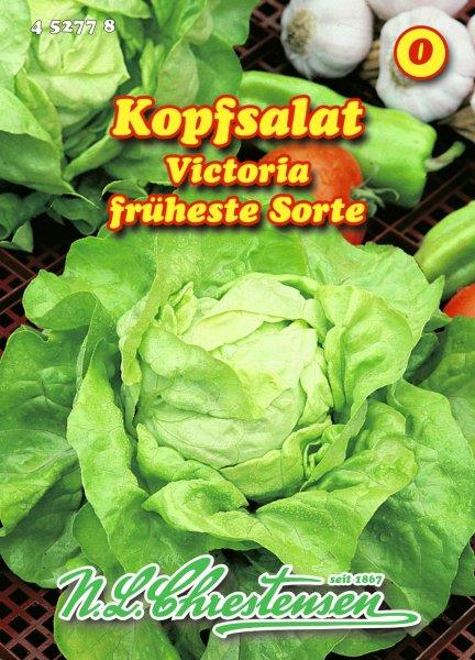 Kopfsalat Viktoria