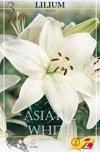 Asiatic Bright Diamont 3St.