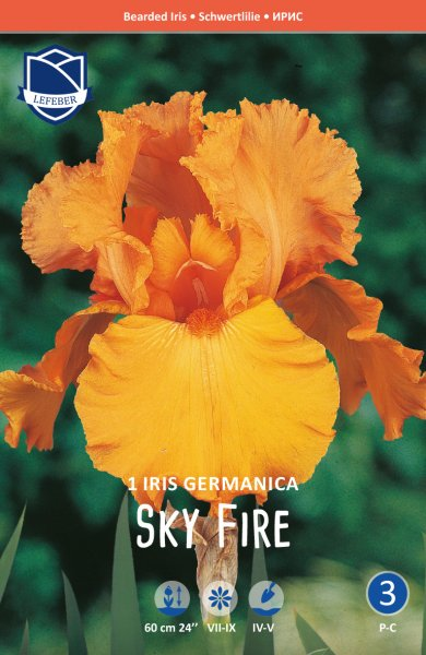 Iris germanica Sky Fire