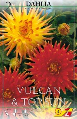 2 Dahlien Vulcan & Top Sun