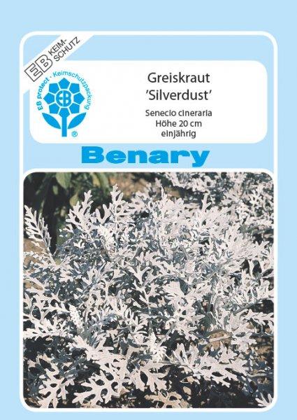 Silbereiche / Greiskraut