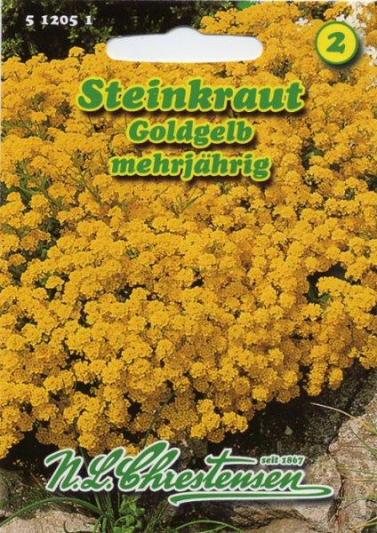 Steinkraut Goldgelb