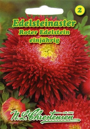 Aster Roter Edelstein