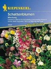 Sommerblumen Schattenmix