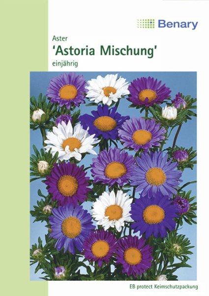Aster Astoria Mix 70cm