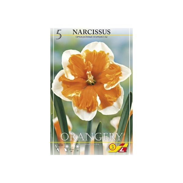 Narzisse Orangery