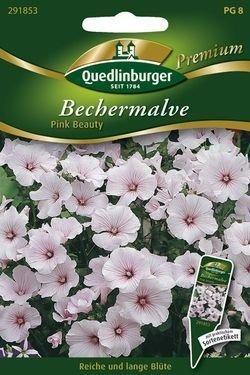 Bechermalve Pink Beauty