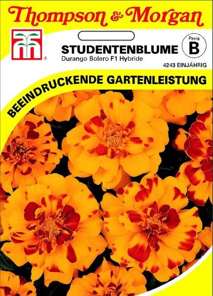 Studentenblume Durango Bolero