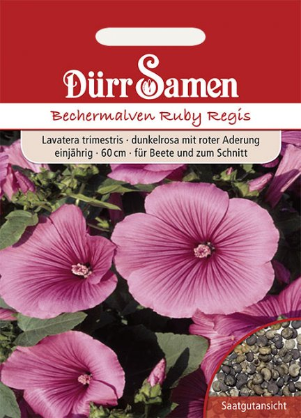 Bechermalve 'Ruby Regis'