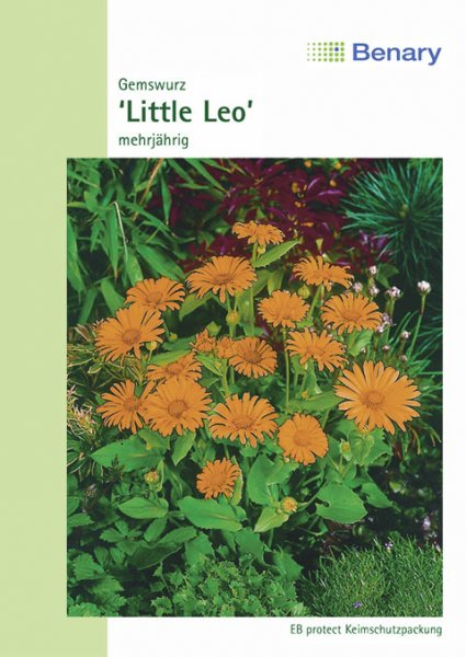 Gemswurz Little Leo