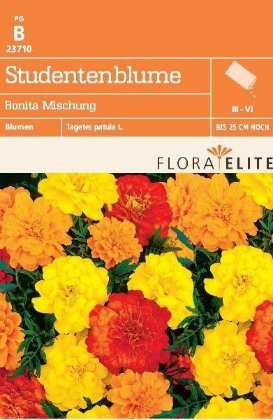 Studentenblume Bonita