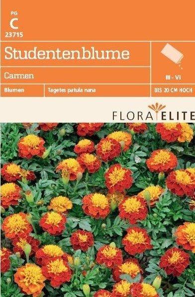 Studentenblume Carmen