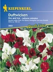 Wicken Duft Fire and Ice