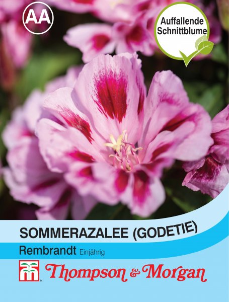 Sommerazalee (Godetie)