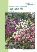 Gomphrena Las Vegas Mix