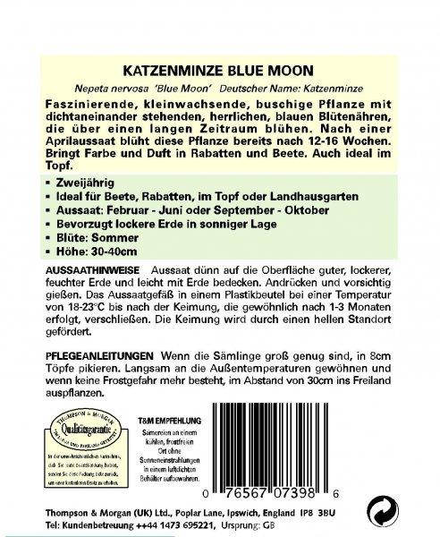 Katzenminze Blue Moon