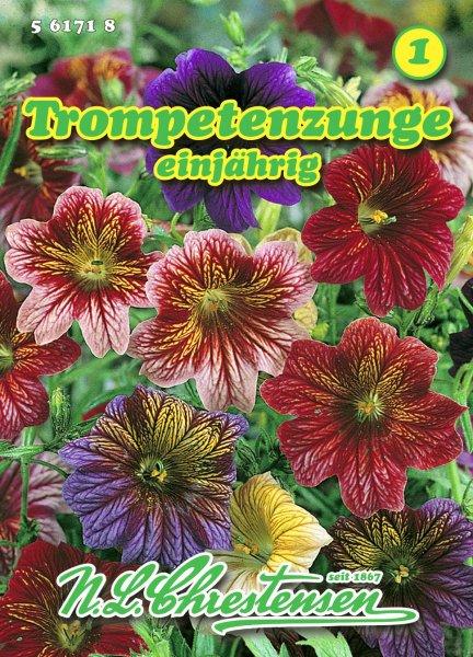 Trompetenzunge Superbissima, einjährig