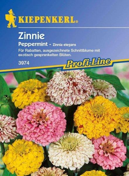 Zinnie Peppermint