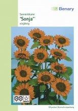 Sonnenblume Sonja ca.100cm